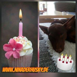 Pinat Geburtstag Bild